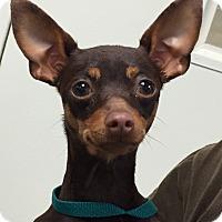 Adopt A Pet :: Launa - geneva, FL