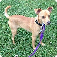 Adopt A Pet :: Jack - Bedford, VA