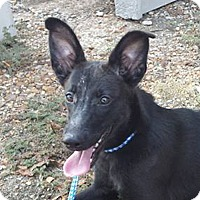Adopt A Pet :: Ebony - Preston, CT