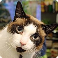 Adopt A Pet :: Storm - Troy, MI