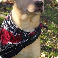 Adopt A Pet :: Dale - Cranford, NJ