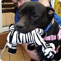 Adopt A Pet :: Tails - Villa Park, IL