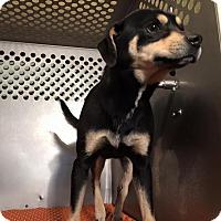 Adopt A Pet :: Toby - Lewisburg, TN