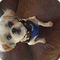 Adopt A Pet :: Zippy - Scottsboro, AL