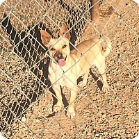 Adopt A Pet :: Roscoe - Post, TX