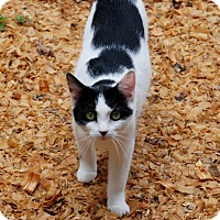 Adopt A Pet :: Spunky - Salem, WV