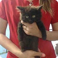 Adopt A Pet :: A493586 - San Bernardino, CA