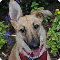 Adopt A Pet :: Nala - Atlanta, GA