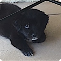 Retriever (Unknown Type) Mix Dog for adoption in Alpharetta, Georgia - Kenzi