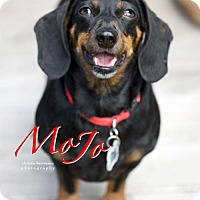 Adopt A Pet :: Mojo - San Antonio, TX
