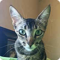 Adopt A Pet :: Nani - Chula Vista, CA