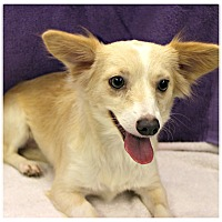 Adopt A Pet :: Betty - Forked River, NJ