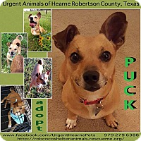 Adopt A Pet :: Puck - Hearne, TX