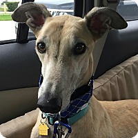 Adopt A Pet :: Funky - West Palm Beach, FL