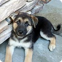 Adopt A Pet :: Hero - Downey, CA
