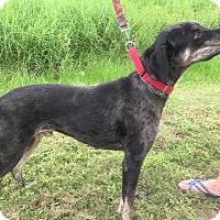 Adopt A Pet :: Tex - Jay, NY