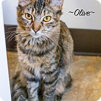 Adopt A Pet :: Olive - Leander, TX