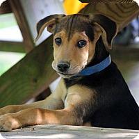 Adopt A Pet :: Perkin - Waldorf, MD