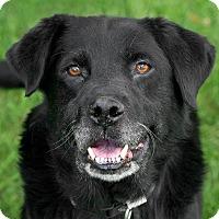 Adopt A Pet :: Jazz - Westfield, NY