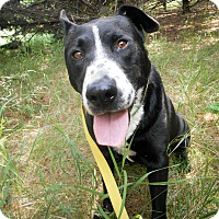 Adopt A Pet :: Ella - Palmyra, NE