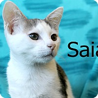 Adopt A Pet :: Saia - Wichita Falls, TX