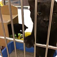 Adopt A Pet :: Berlioz - Byron Center, MI