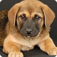 Adopt A Pet :: Hulk - Newland, NC