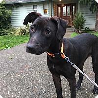 Adopt A Pet :: Naya - Tumwater, WA