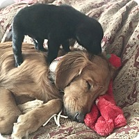Adopt A Pet :: Benson, Barley, bentley - Carlsbad, CA