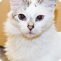 Adopt A Pet :: Sky - Irvine, CA