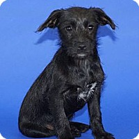 Adopt A Pet :: Little Johnny - Tustin, CA