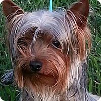 Adopt A Pet :: Miles - Brattleboro, VT
