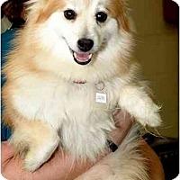Adopt A Pet :: Jea - Chesapeake, VA