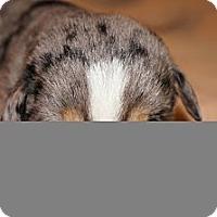 Adopt A Pet :: Coco aka Stella 11 - Conway, AR