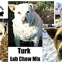 Adopt A Pet :: Turk - Battle Creek, MI