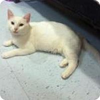 Adopt A Pet :: Natalie - Herndon, VA