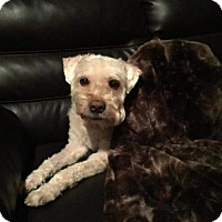 Adopt A Pet :: Jacie in VA - North Kansas City, MO