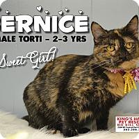 Adopt A Pet :: Bernice - Davenport, IA