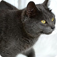 Adopt A Pet :: Adeline - Florence, KY