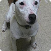 Adopt A Pet :: Rudy - Gary, IN