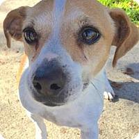 Adopt A Pet :: Tink - Sunnyvale, CA