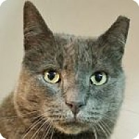 Adopt A Pet :: Thomas - Medford, MA