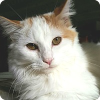 Adopt A Pet :: Timmy - Encino, CA