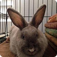 Adopt A Pet :: Intellie - Los Angeles, CA