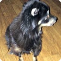 Adopt A Pet :: Bear - Mesa, AZ