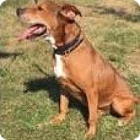 Hound (Unknown Type) Mix Dog for adoption in LaGrange, Kentucky - Mr. Bones