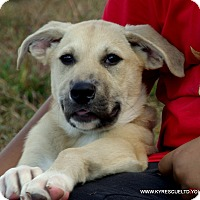 Adopt A Pet :: ROSE - PRINCETON, KY