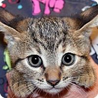 Adopt A Pet :: Breezy - Wildomar, CA