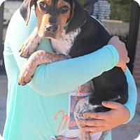 Beagle Mix Dog for adoption in Mocksville, North Carolina - Frieda