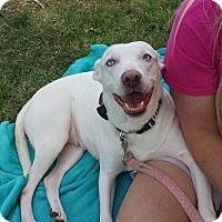 Adopt A Pet :: Helen - Wichita Falls, TX